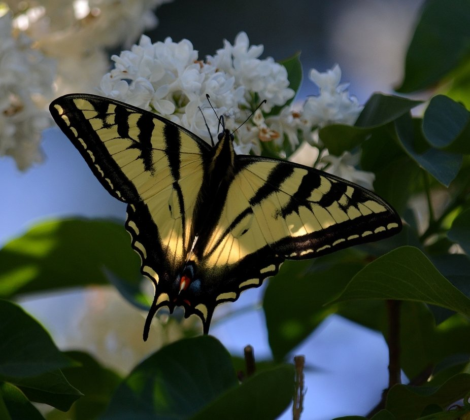 Natures abundance