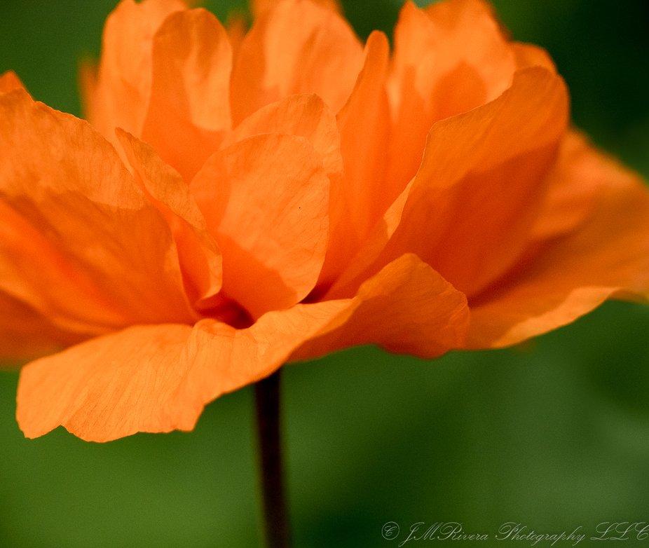 Orange Flower - Botanic Gardens