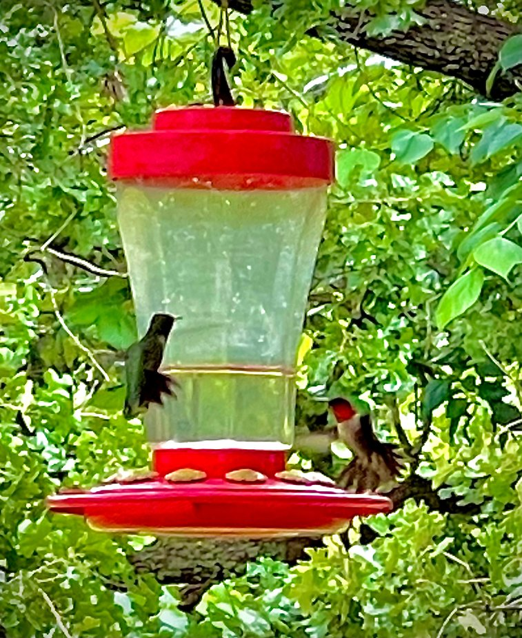 A male and female hummingbird at a feeder.