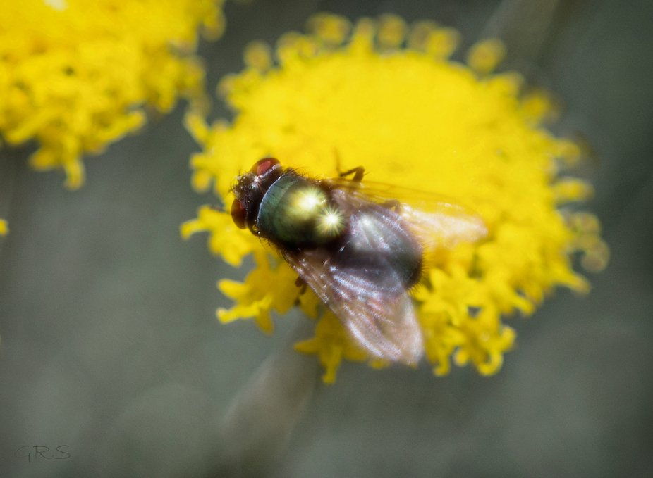 Well, usually they are ugly but this one came out glistening in the photo. Macro photo taken with...