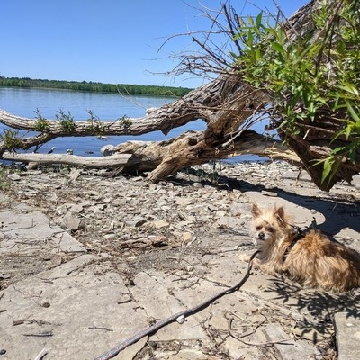 dog on the rocky beach of the river.
