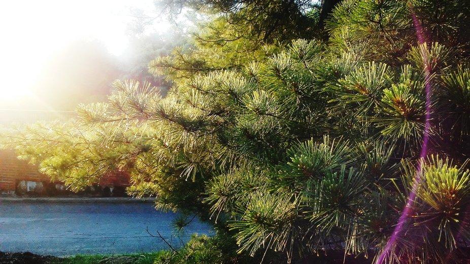 sun pines.JPG