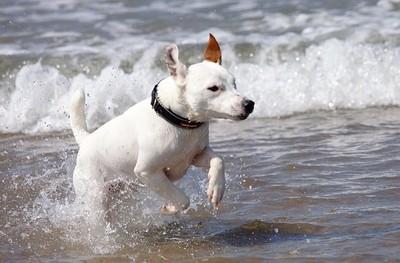 Ralph loves the sea.