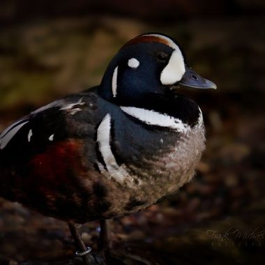 A duck in the dark...