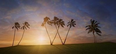The Shining Palm Trees On A Hill.