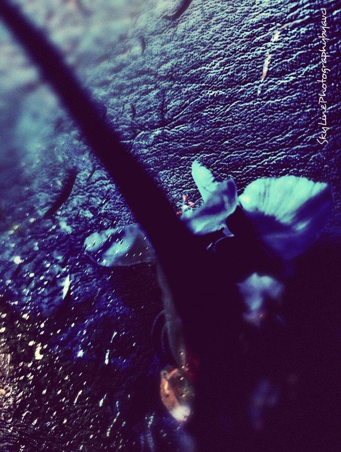 flowers & rain & sadness
