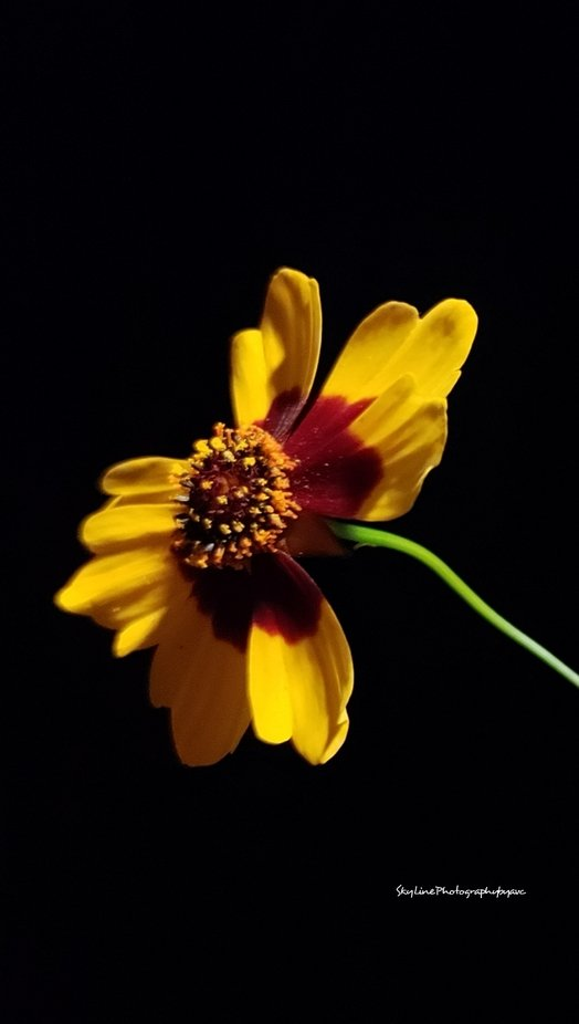 flowers & bright darkness