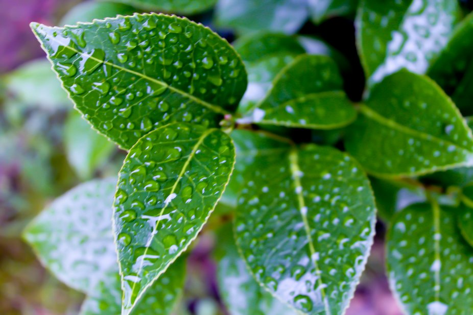 """""""....the perfect beauty of the pattern that each raindrop makes as it joins its puddle."""""""