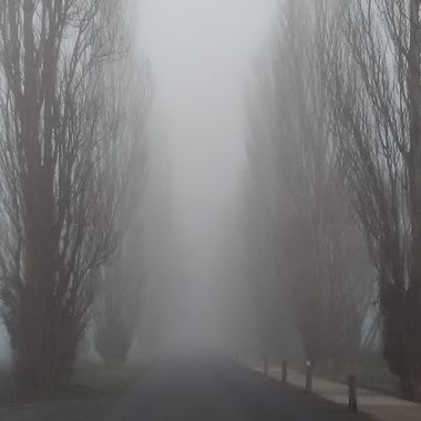Foggy winters morning