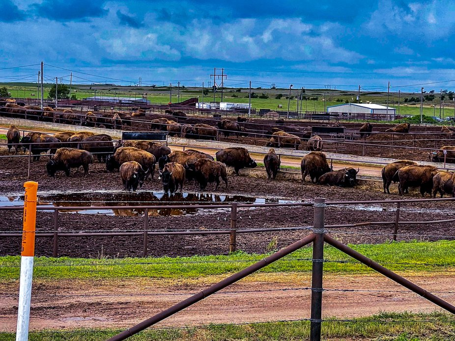 Stockyard in Wheeler Texas