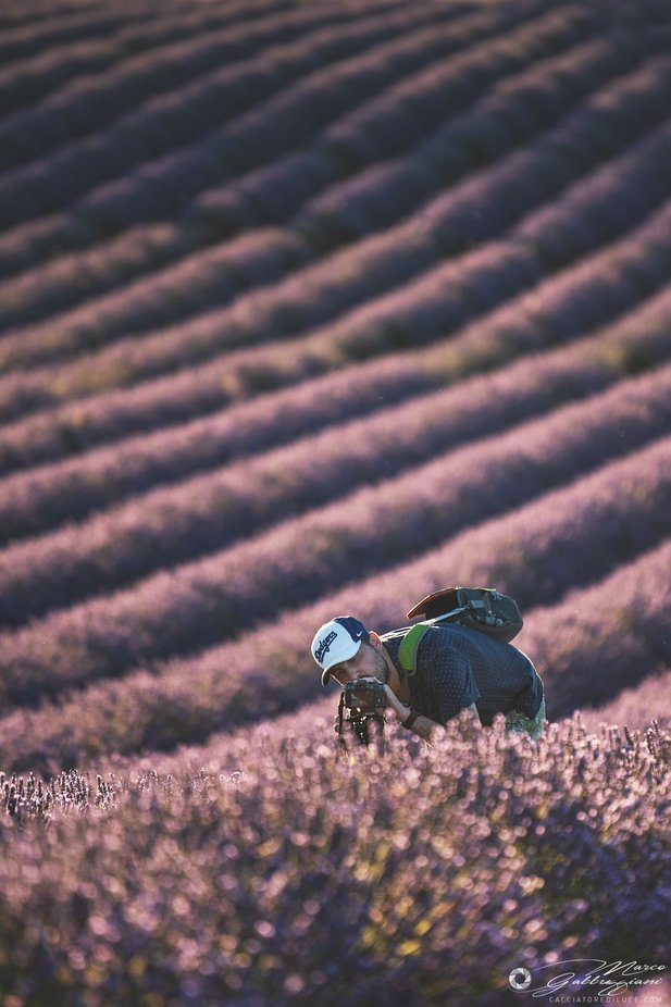 A street photography among the lavender
