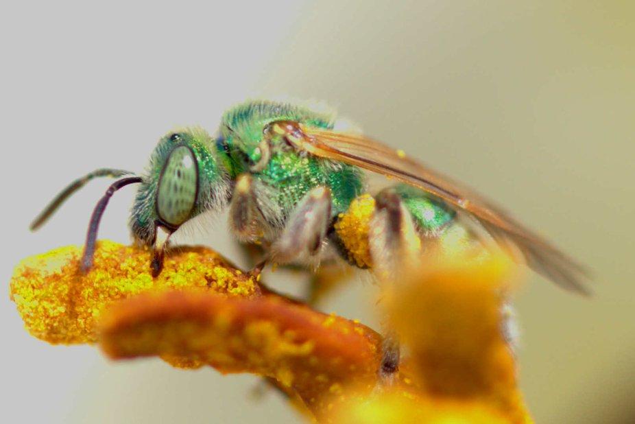 Green Bug Eating