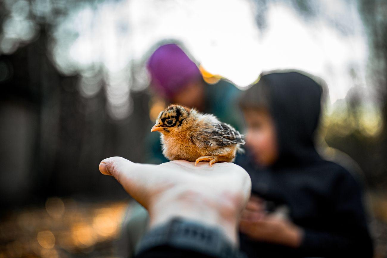Small Animals Photo Contest Winner