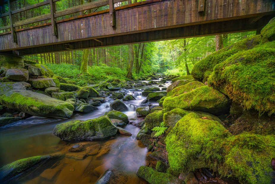 In the Bavarian forest there is a stream that has made its way comfortably into a small gorge and...