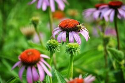 Saturday Drive---Wildflower 2
