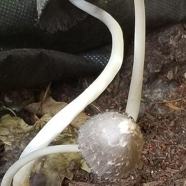Stems and mushroom