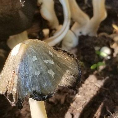 Shadowed mushrooms