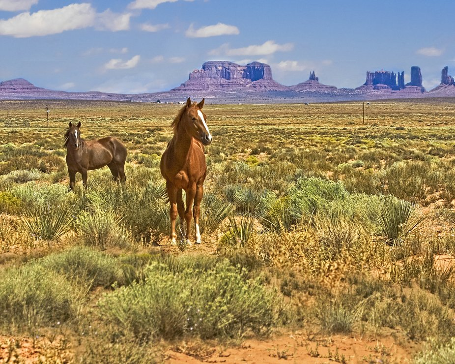 2 Horses In Monument Valley