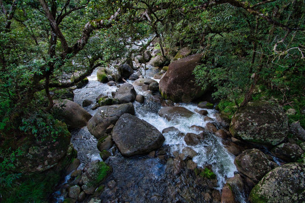 Rainforest Cascade