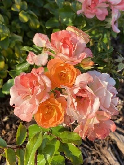 Bouquet on the bush