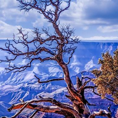Tree Grand Canyon sunset