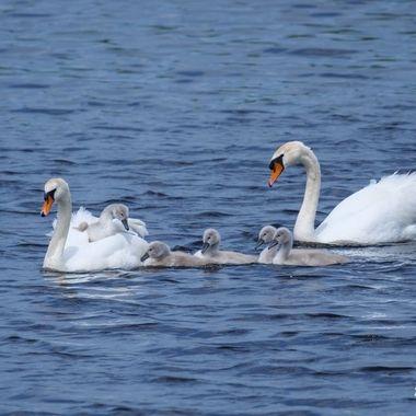 sailing with mum, Rockanje
