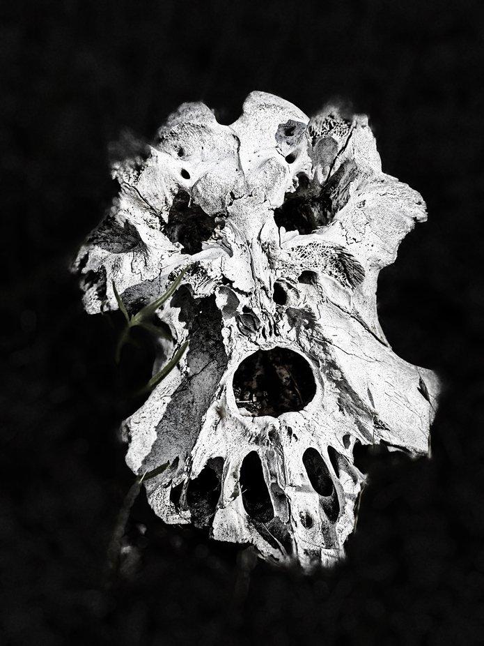 A calf spine