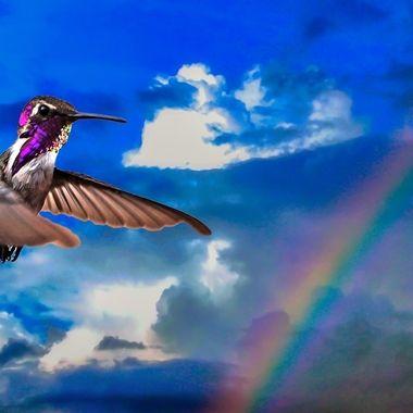 Hummingbird known as Rainbow