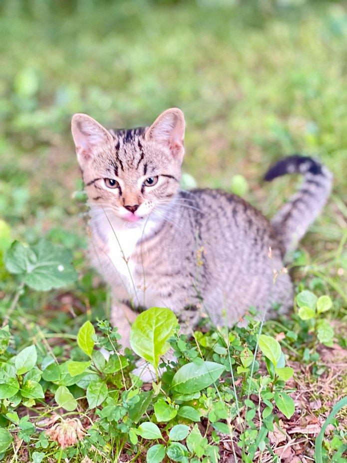 A Kitten in Oklahoma