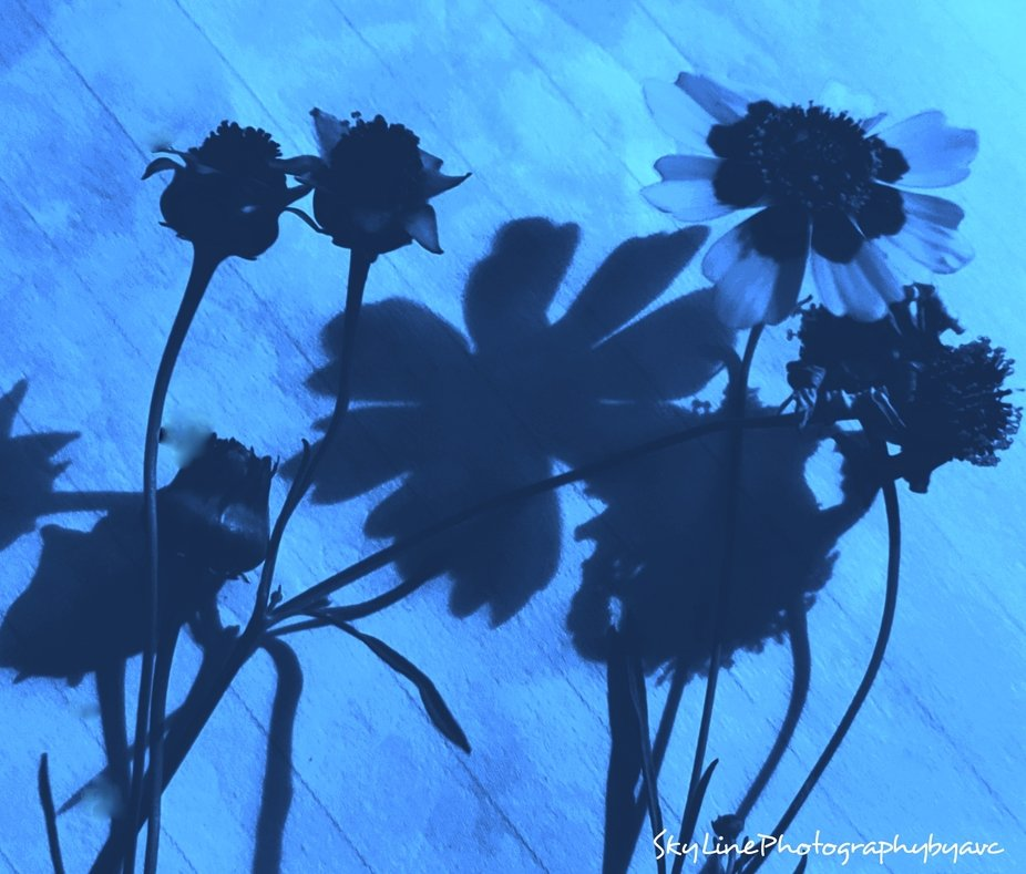 flowers, their shadows, clouds on blue paper..... my favorite part of this-my created props & the things I find to place w them!