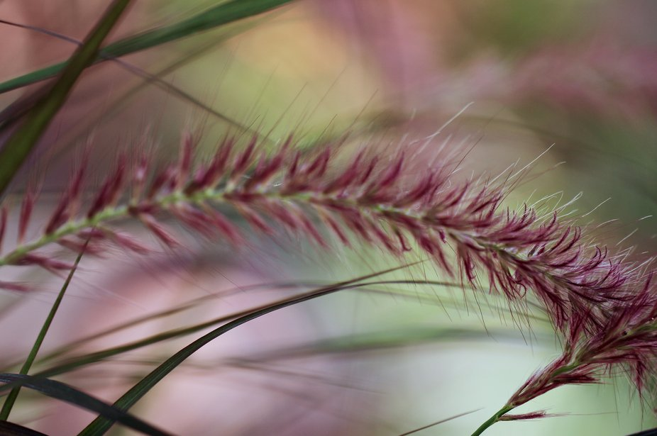 My photography...nature_macro
