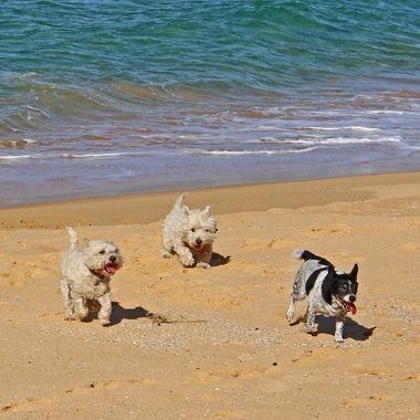 Furkids having fun on the beach