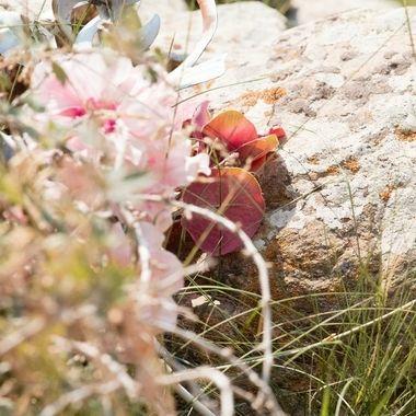 Near a gravesite in Custer State Park, South Dakota of a little girl.