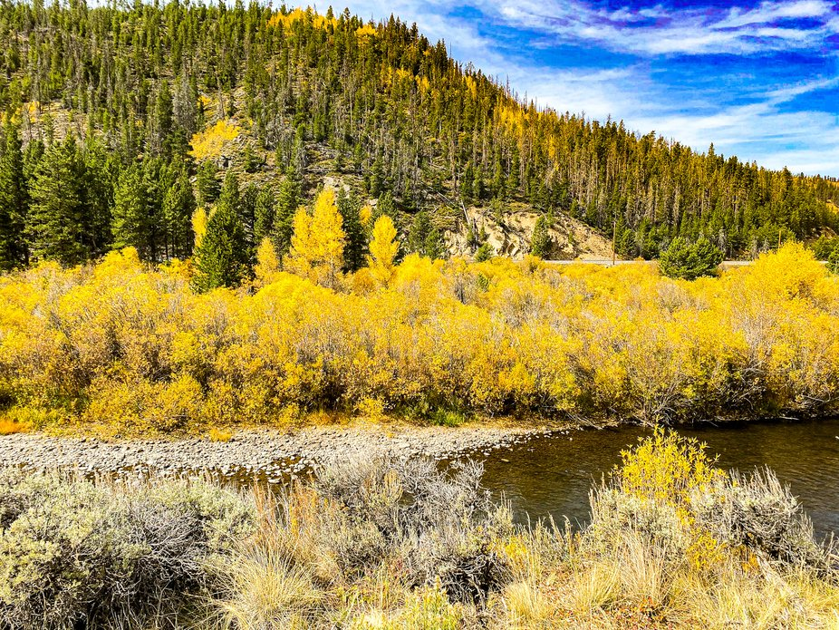 Aspens turning at the beginning of fall in the Colorado Rocky Mountains.