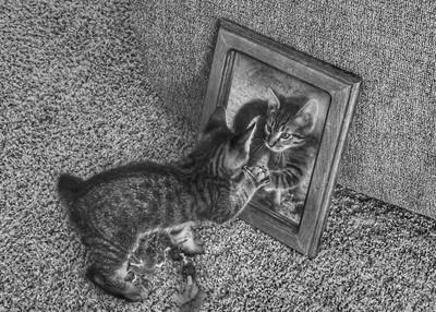 Kittens reflection