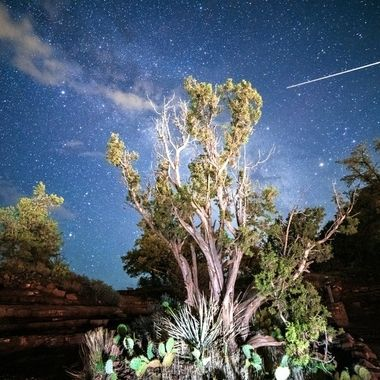 The last few clouds from a large summer monsoon pass between the Milkyway and a Juniper Tree