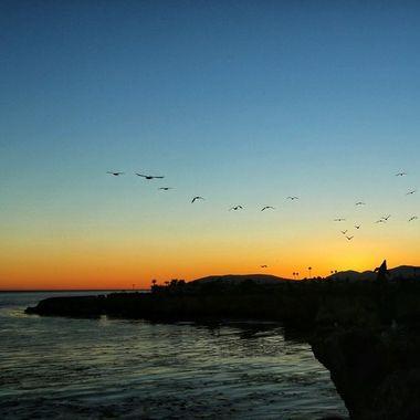 Seabirds in flight!