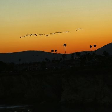 Pelicans in flight at sunset over Pismo Beach on California's central coast!