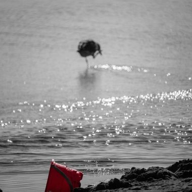 Took a beach day to go run the camera and just to sit and people watch, relax and do not much of anything.  Turned all the color in this photo down but the red bucket to make it a sort of black and white.