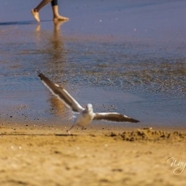 The seagulls were thick as usual for beach day at Huntington Beach, CA.