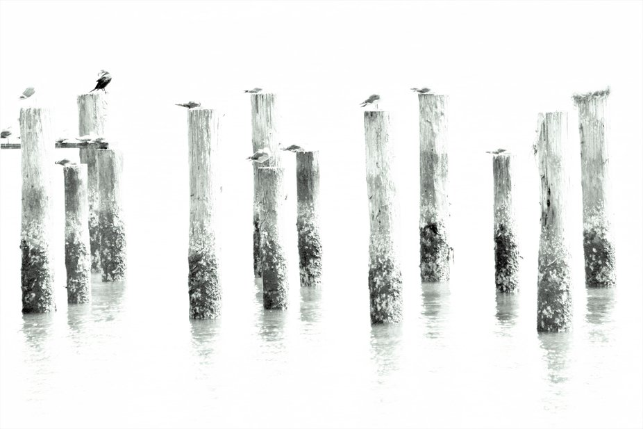 I liked these pilings with the birds resting on each and the piling reflections, but I wanted to ...