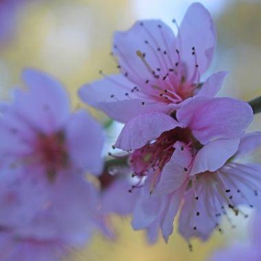 Blossom's