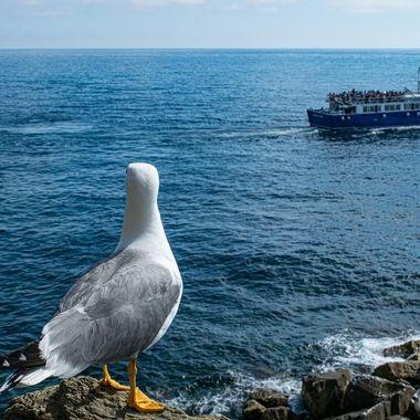 Gulls Life