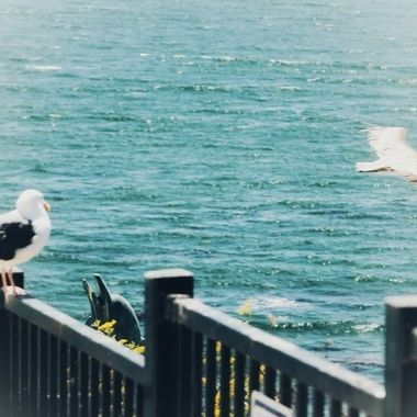 Friendly co-existing seabirds!