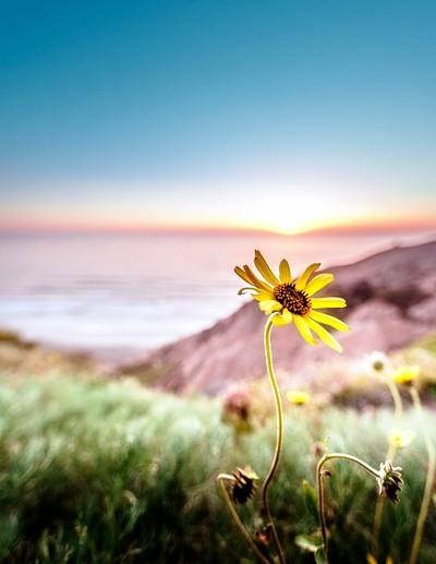 Torrey Pines Flower | Torrey Pines, California