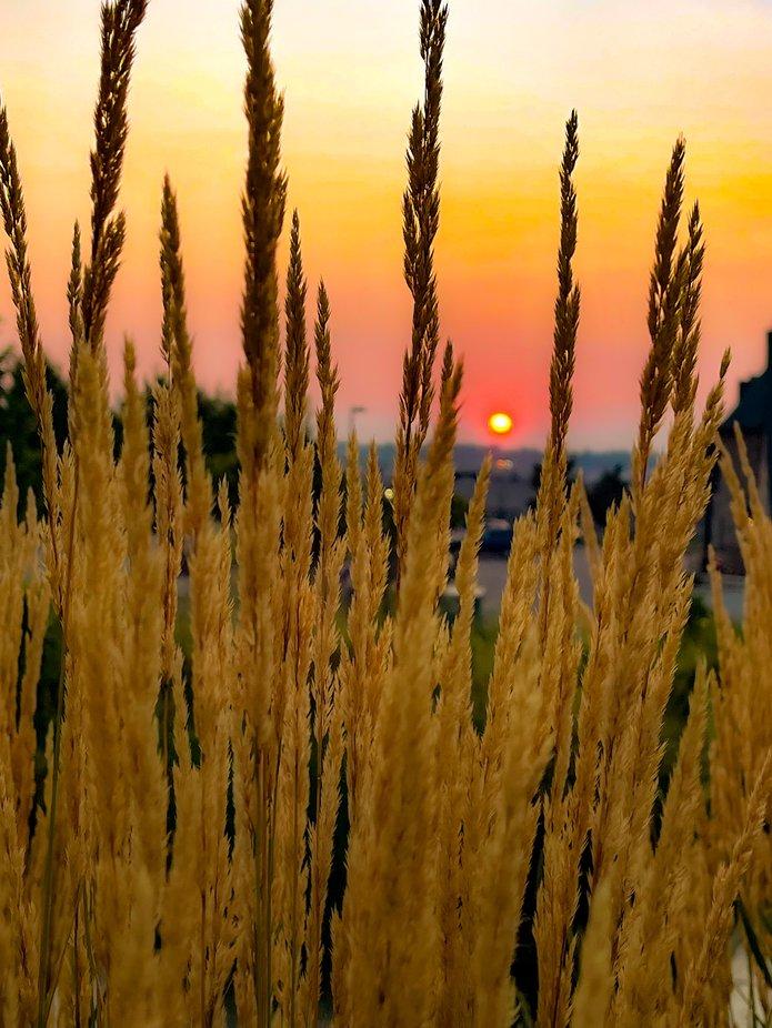 Summer sunrise in Colorado Springs, Colorado.
