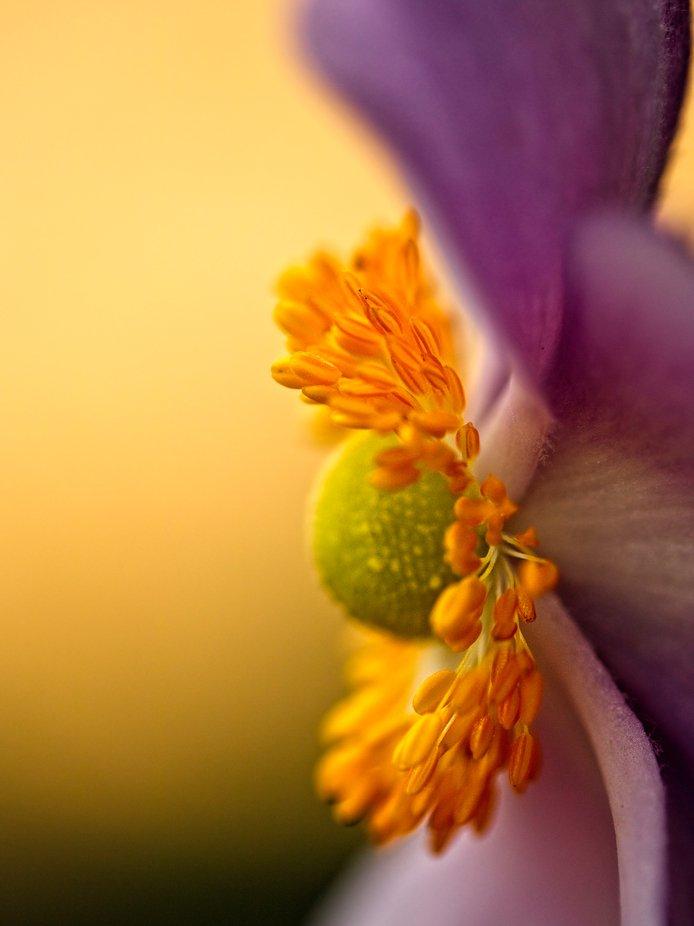 Brilliant Garden Colors…