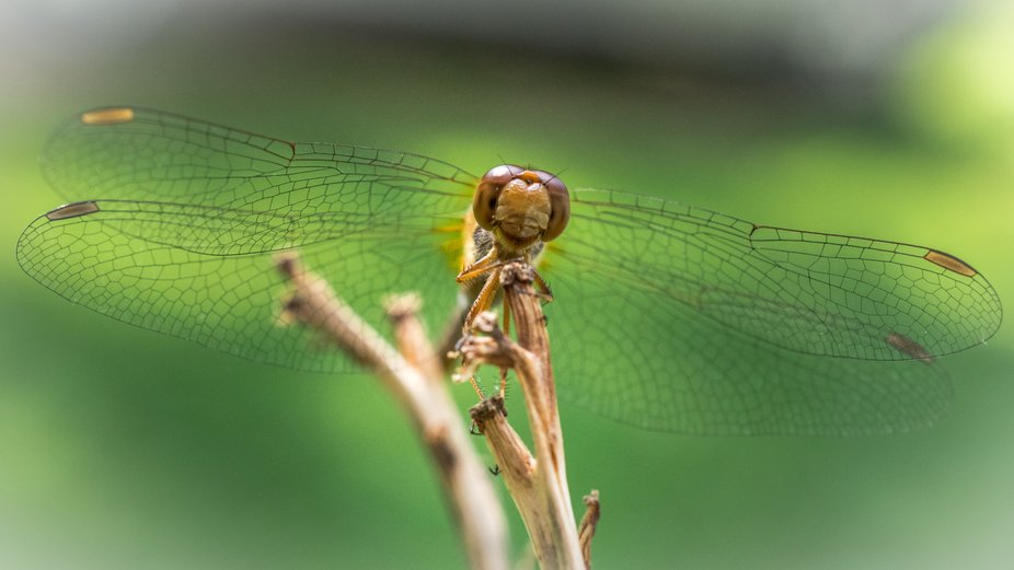 A dragonfly pauses to smile at the camera.