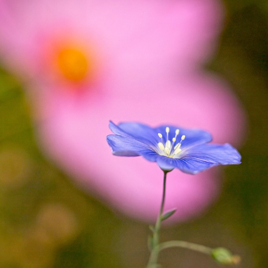 Flax in the cosmos…