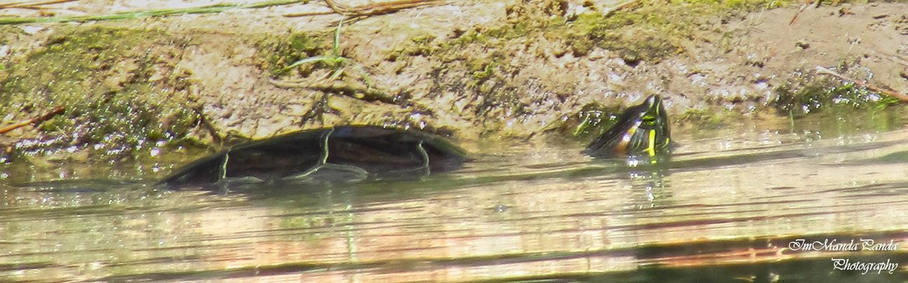 I saw a little turtle today! =D